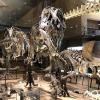 dinosaur-museum