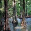 まるでジブリ『もののけ姫』のシシガミの森。篠栗九大の森