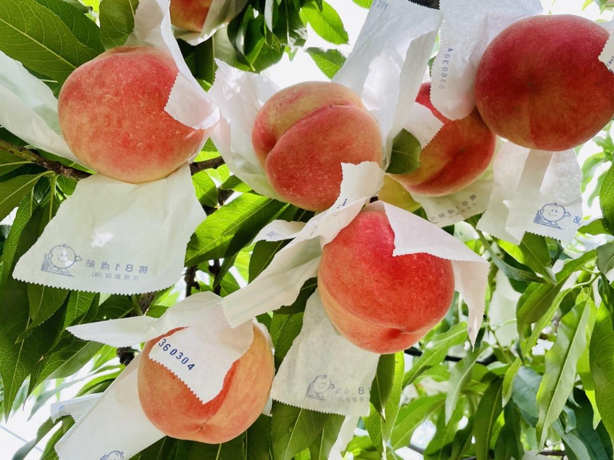 meikaenfruit-peach