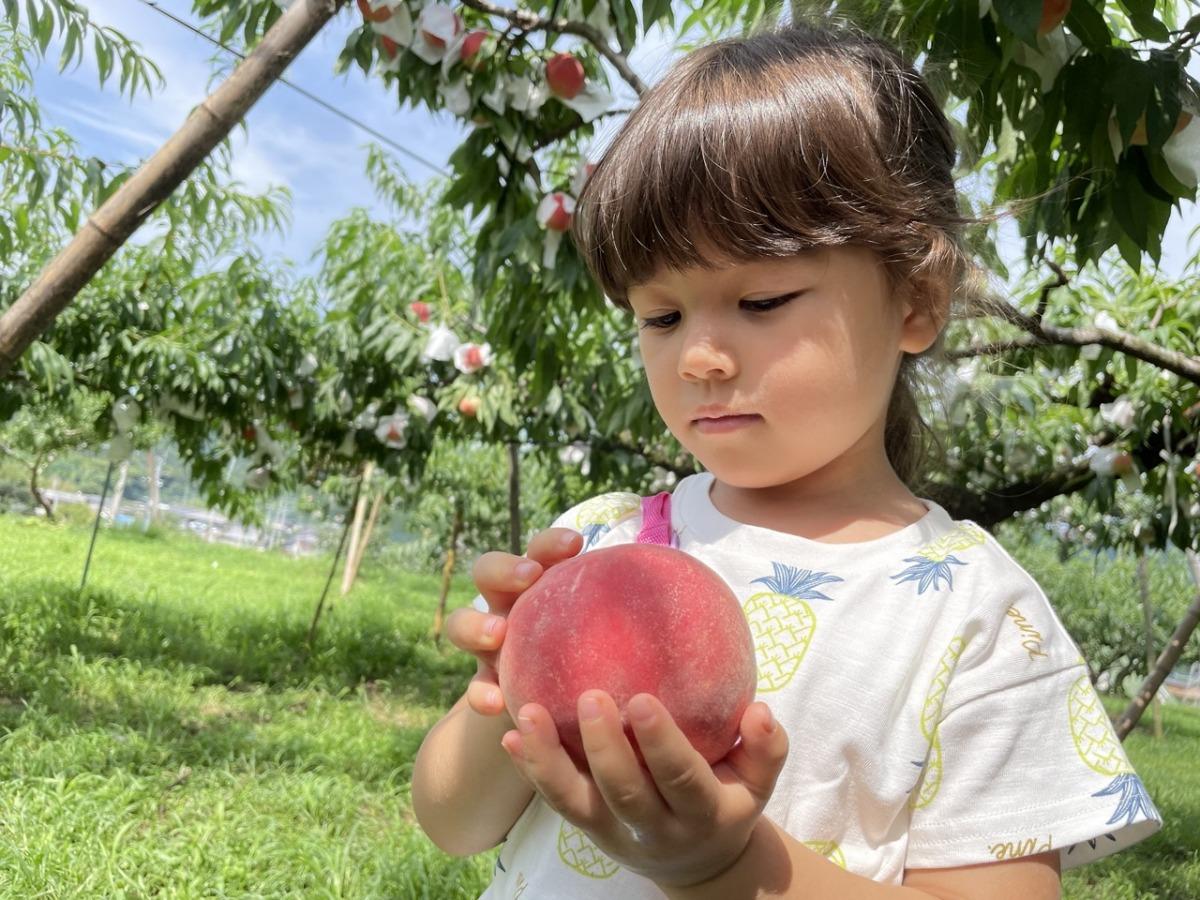 meikaenfruit-peach2