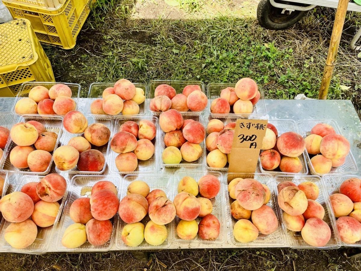meikaenfruit-ukiha2