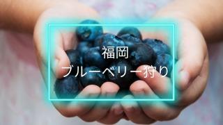 blueberry_in_fukuoka