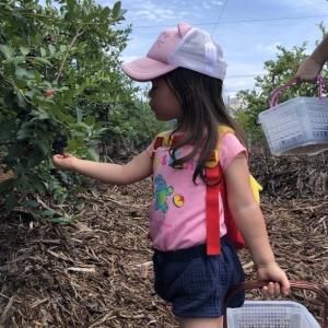 kids-berry-garden15
