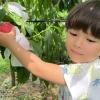 meikaenfruit-peach-garden-fukuoka
