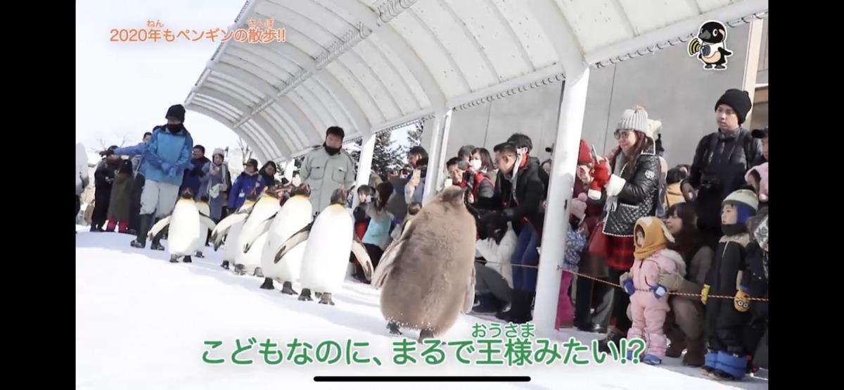 d-kids-zoo02